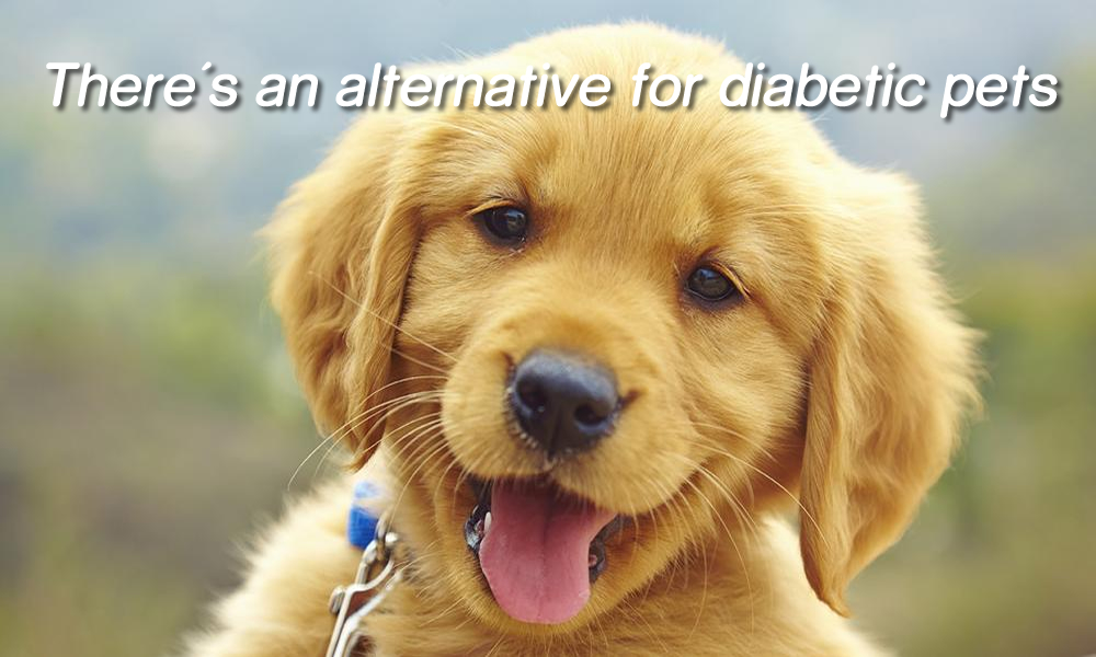 Needle Free Injections for Pets
